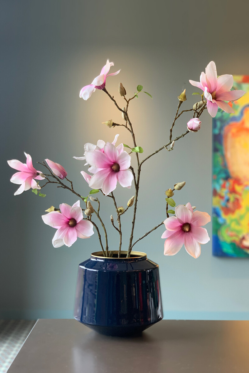 Color Relation Product Flowering Plant Cheerful Magnolia